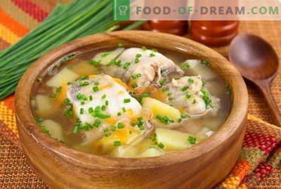 Ribja juha - najboljši recepti. Kako pravilno in okusno kuhati ribjo juho.