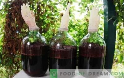 Domače grozdno vino z rokavico - izhod! Tehnologija za izdelavo domačega grozdnega vina z rokavicami