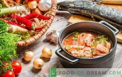 Rdeča ribja juha - odličen okus in največja korist. Izbor najboljših receptov rdeče ribje juhe s proso, paradižnikom, rdečim kaviarjem