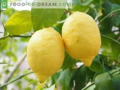 Lemoni: korist in škoda
