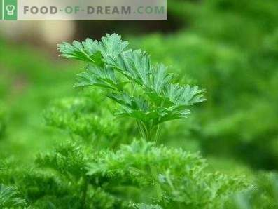 How to store parsley
